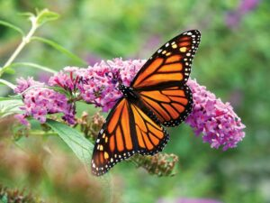 Create a Paradise for Pollinators